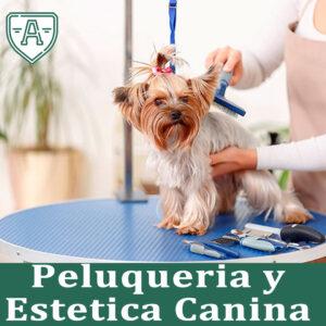 curso-peluqueria-canina