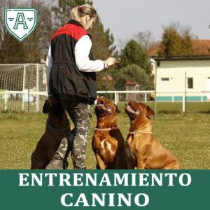 entrenamiento-canino